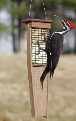 Eco-Strong Tail Prop Suet Feeder: Gorgeous Pileated Wood ...