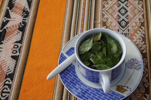Tea cups with Coca leaves infusion known as Mate de Coca