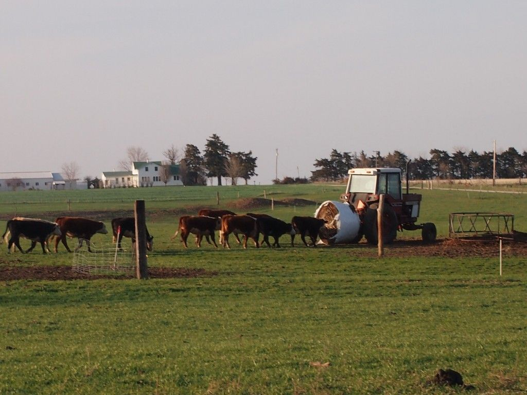 Plain Kansas: A Harvest of Happiness | Amish Recipes Oasis Newsfeatures