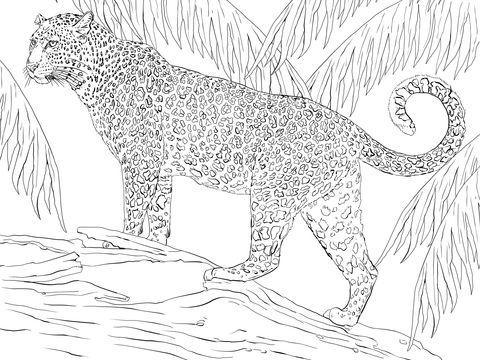 Jaguar Dibujo Para Colorear Animales En 2019 Dibujos Para