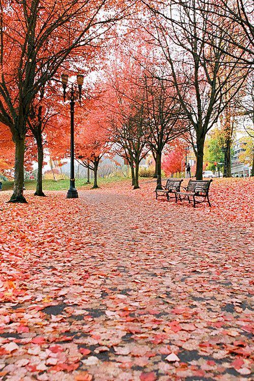Autumnal shades