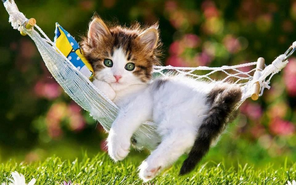 Swinging Kitty Cute Cats Kittens Cutest Animals