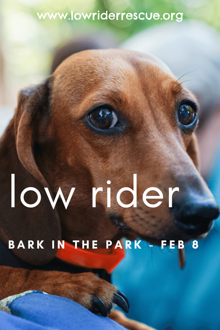 Low Rider Bark In The Park In 2020 Lowriders Rider Pet Costumes Contest