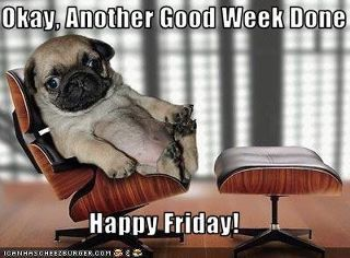Hy Friday Cute Pugs Funny