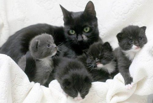 Kitty Leads Someone To Save Her Kittens With Images Newborn Kittens