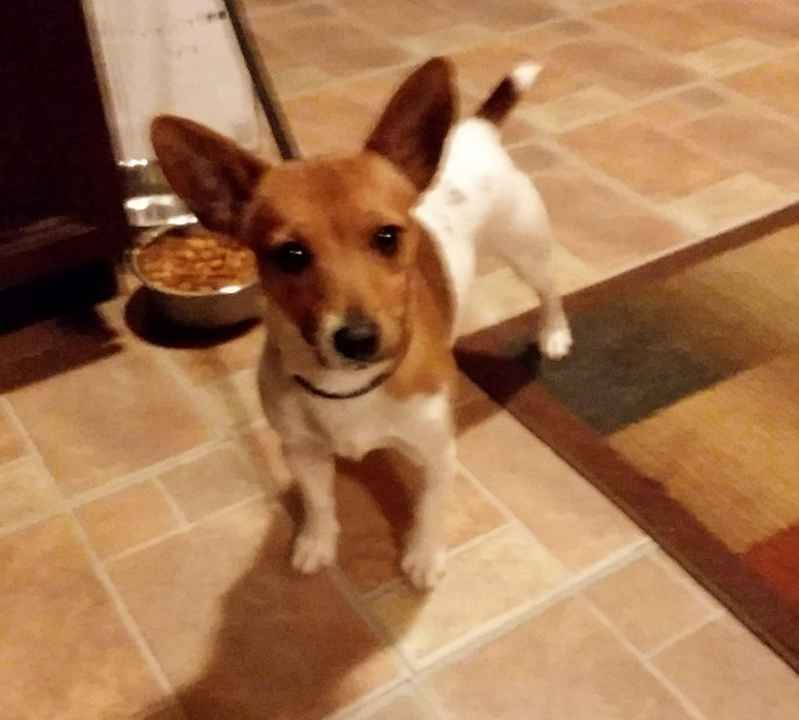 Lost Dog Male Mount Vernon, OH, USA 43050 Losing a
