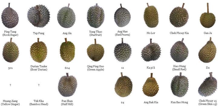Senarai Jenis Buah Durian Popular Di Malaysia