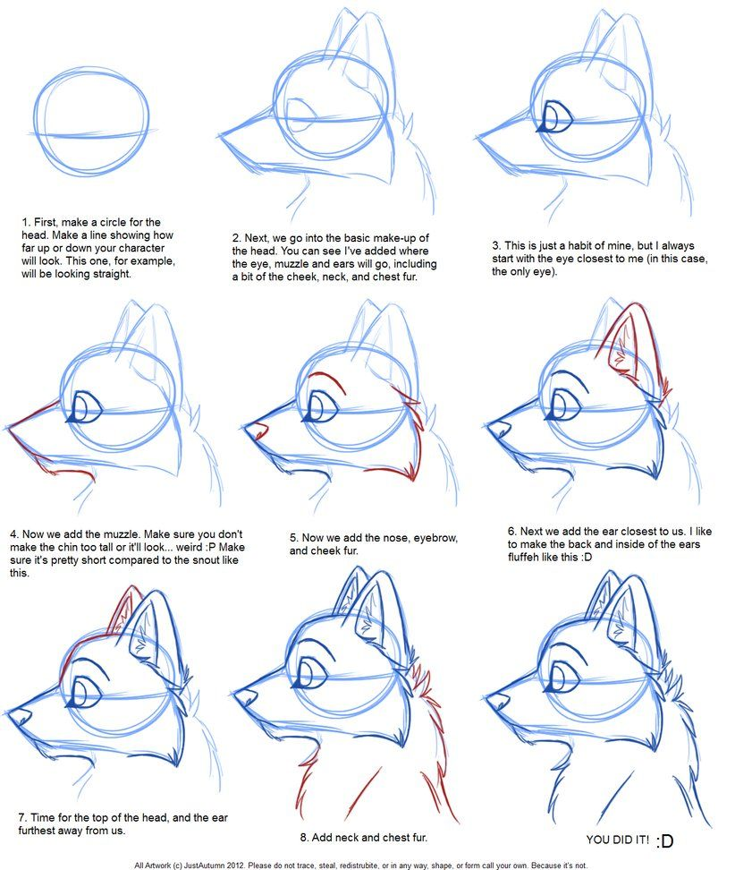 Tutorial For Character Design : How to draw canine profile tutorial by justautumn on