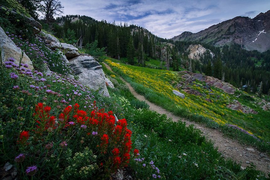 Catherine Pass Wildflower Trail Wasatch Mountains Landscape Photography Clint Losee Photograp Mountain Landscape Photography Landscape Mountain Landscape