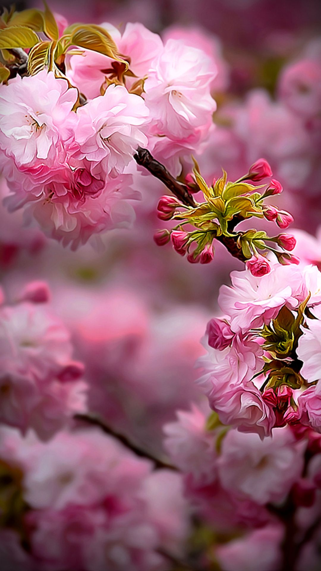 Pin by Vactual Papers on Mobile Wallpapers | Flowers