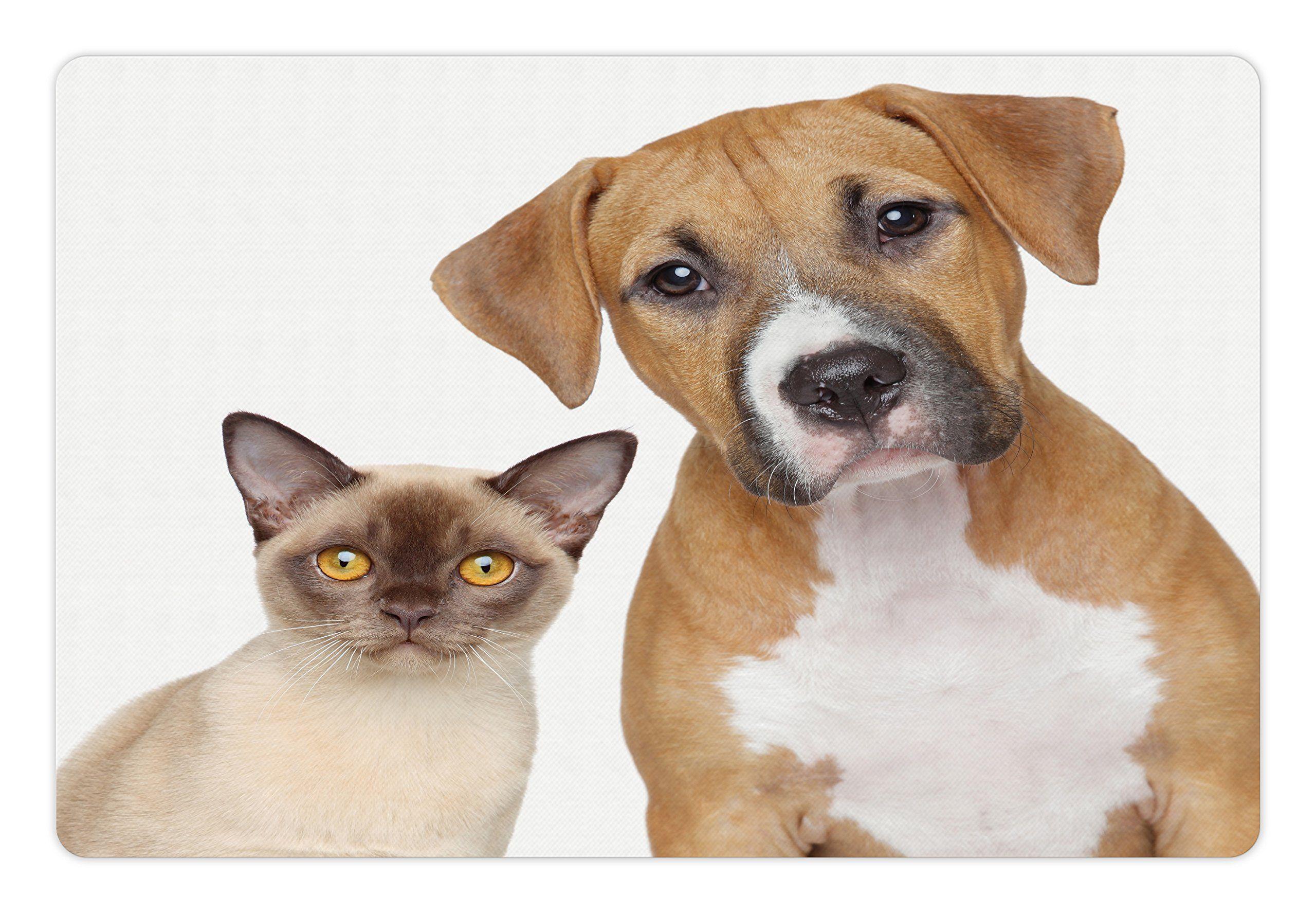 Pin On Cat Feeding Supplies