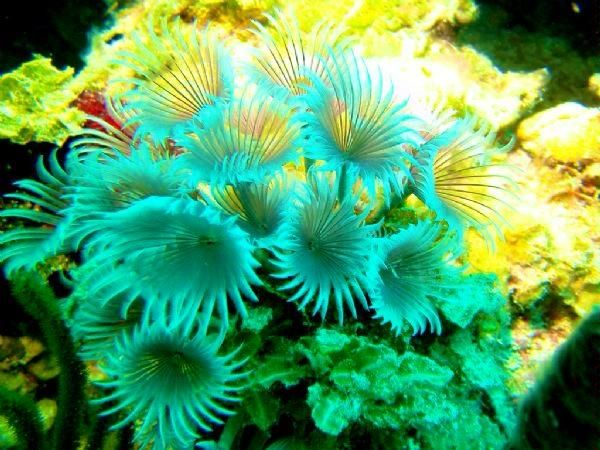 Plants in the ocean | Pearltrees | beneath the surface 2015 DSYC ...