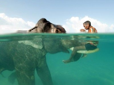 elephant and man in ocean.