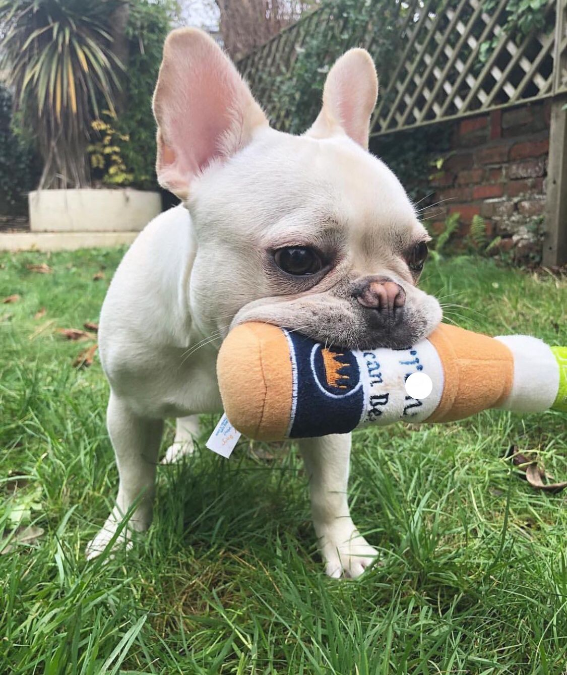 Haute Diggity Dog Toy Ig Ajax Frenchie Grrona Dogtoys