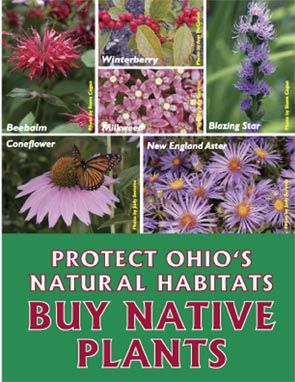 Native plants to northwest ohio
