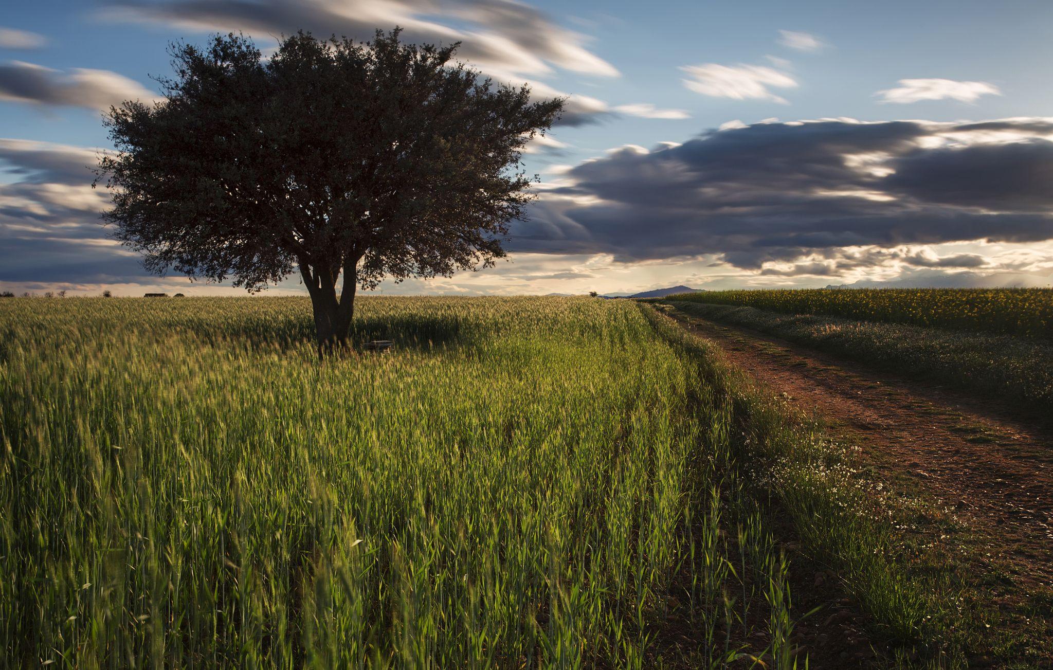Spring sunset by samuvalleys on 500px