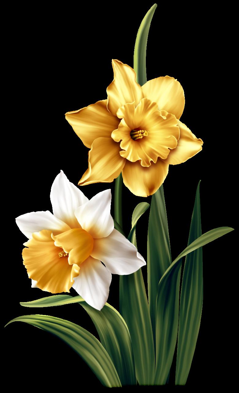 Spring Glow Pintura De Flores Wallpapers Mandalas Pintura Em Tela Flores