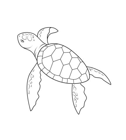 Bebé Tortuga Dibujo para colorear. Categorías: Tortugas. Páginas ...