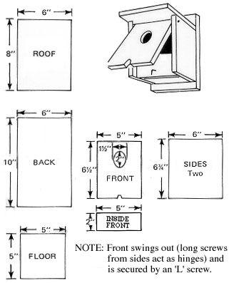 Barn swallow - Wikipedia