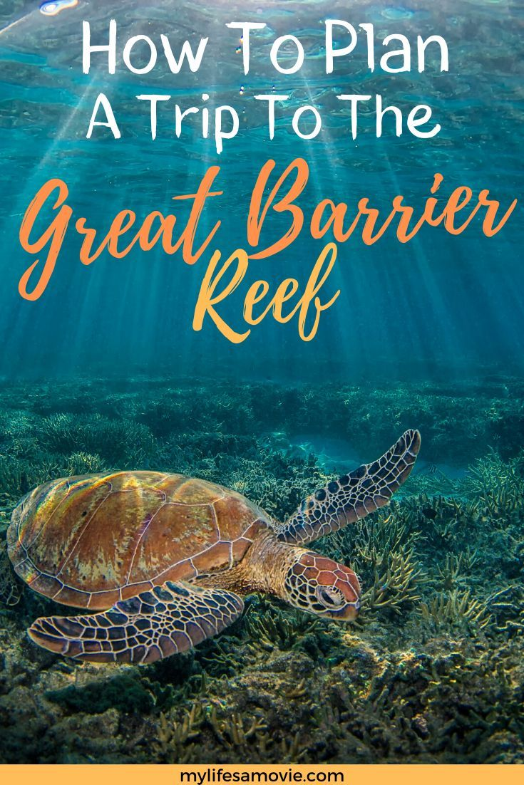 How to Plan a Trip to The Great Barrier Reef Great