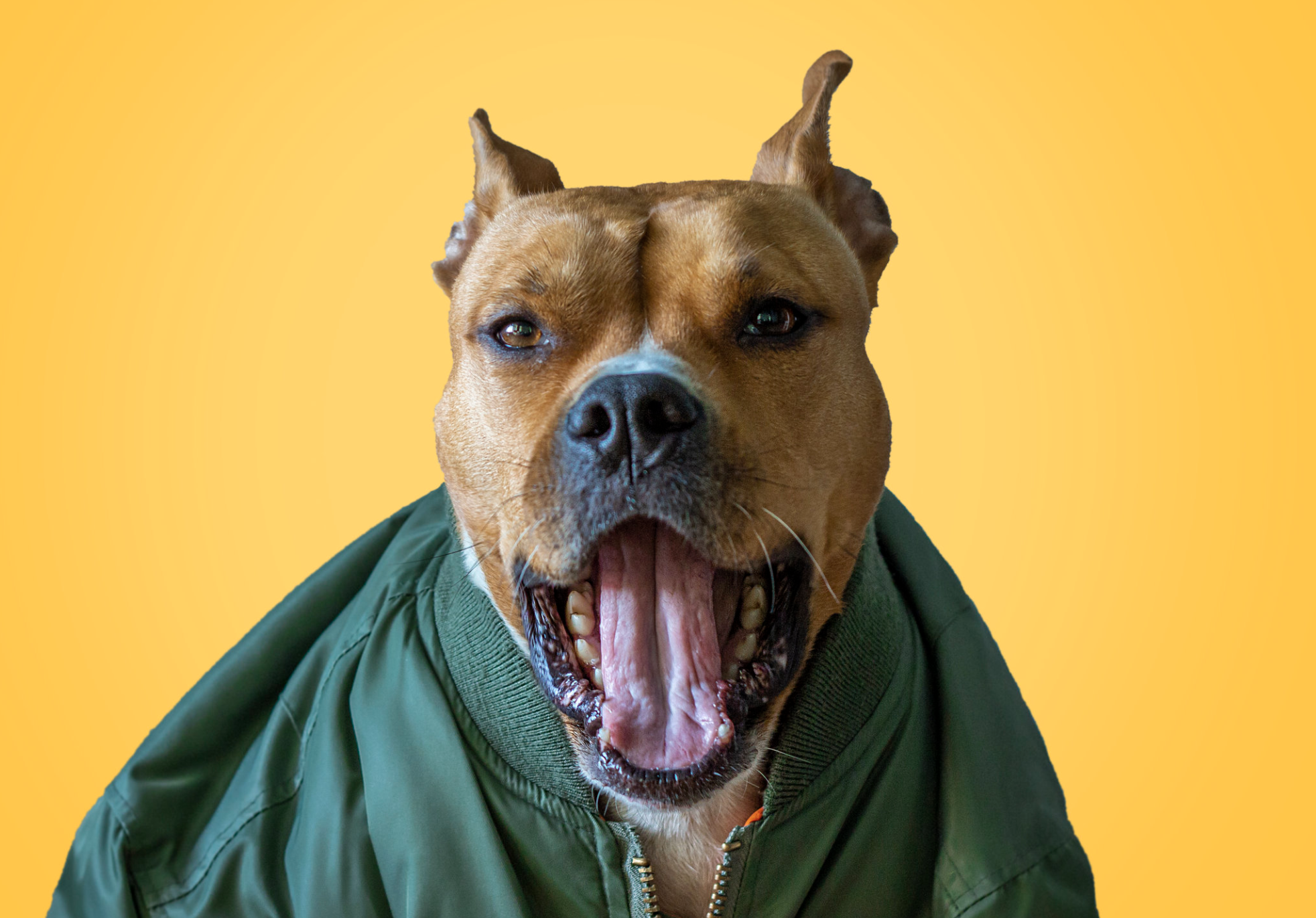 The Deal With Dog Dental Exams Pitbulls Dangerous Dogs Dog Dentist