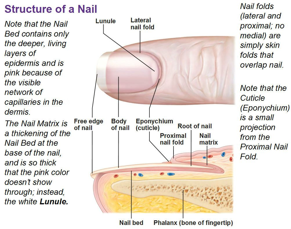 medium resolution of nail treatment toenail fungus treatment cellulite treatment nail bed toenail fungus remedies