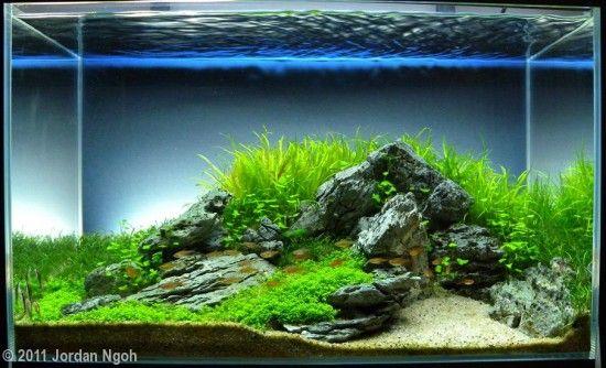 Aga aquascaping contest 2011 tank size 60l 120l blue for Aquarium 120l