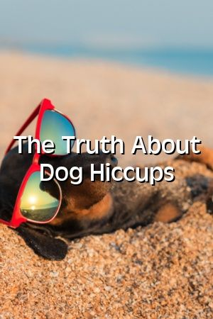 Nicola King Tells About The Truth About Dog Hiccups #dogsdiys#catsanddogs#diysfordogs#dogssmiling#dog#petscats#petideas#diypet#doglife