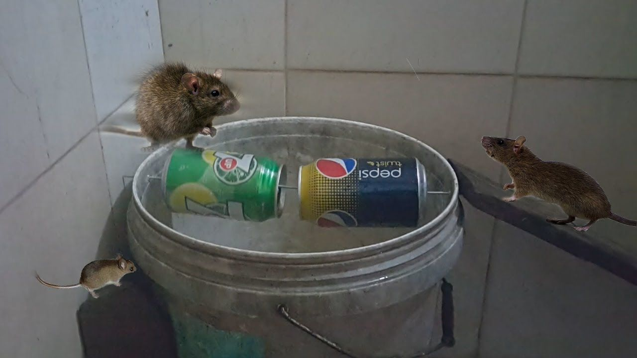 Best mouse trap ever how to make bucket mouse trap best