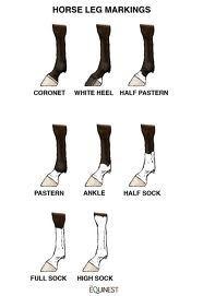 white on leg