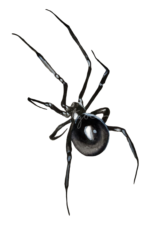 Black Widow Spider Watercolor Halloween Gothic Clipart Clip Art Digital Clip Art Sunflower Clipart