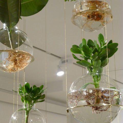 haz jardines colgantes al interior de tu hogar con peceras