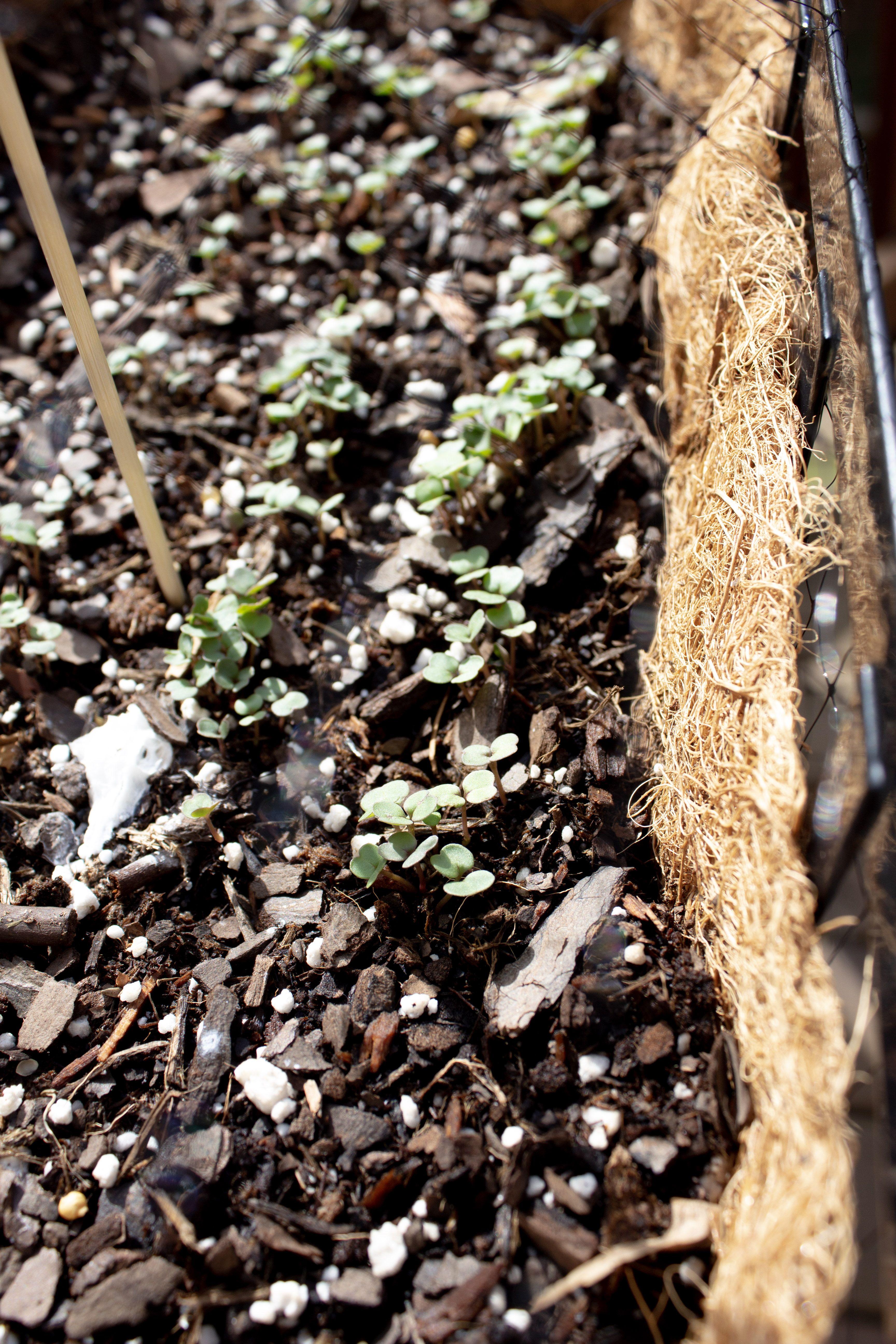 Garden update in 2020 | How to dry basil, Townhouse garden ...
