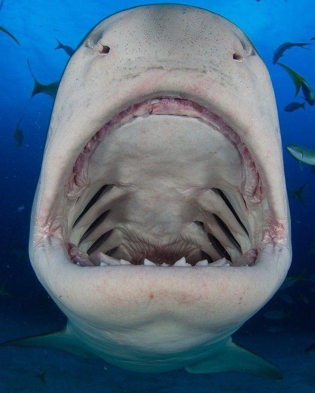 Картинка прикол акула