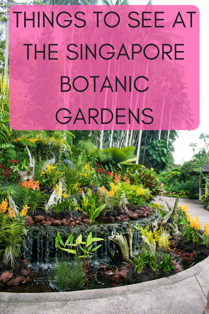 Things To See At The Singapore Botanic Gardens Singapore
