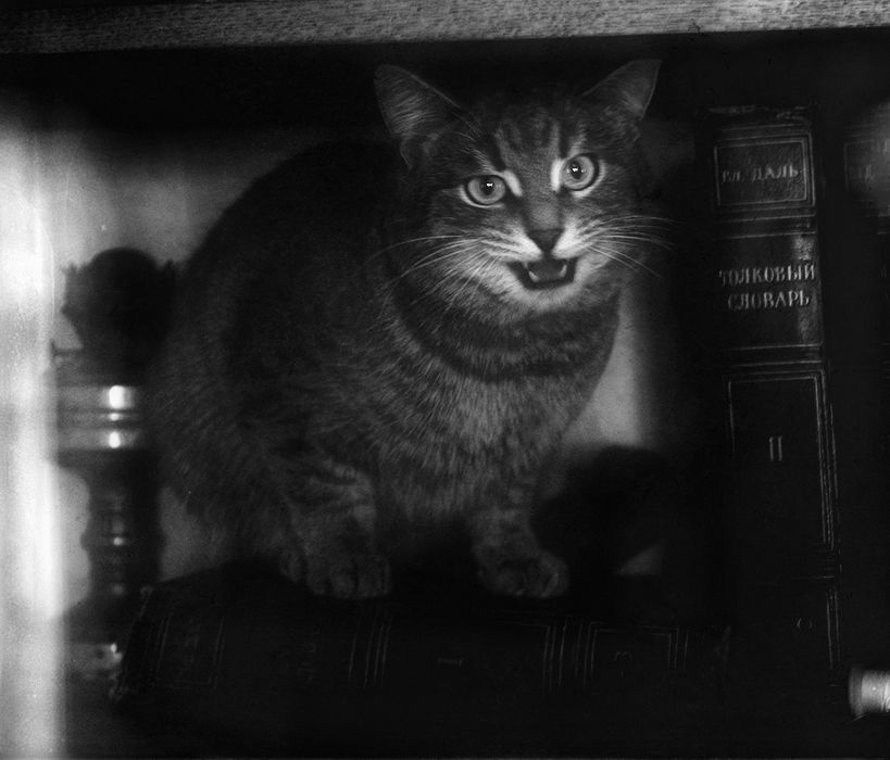 photo: Кот ученый:) | photographer: Elly | WWW.PHOTODOM.COM