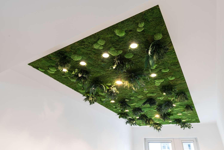 Deckenbegrünung mit Pflanzeninsel, Beleuchtet | Pflanzen