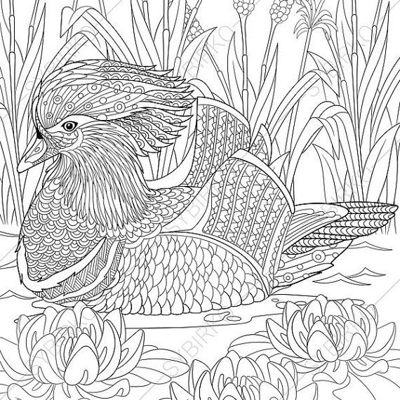 Mandarin Duck Adult Coloring Book Page Zentangle Doodle Pages For Adults Digital Illustration