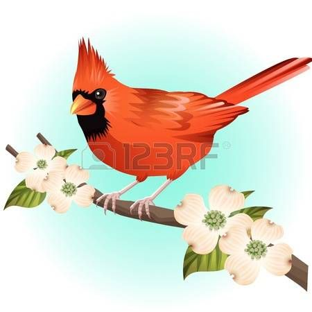 Cardinal clipart printable, Cardinal printable Transparent FREE for  download on WebStockReview 2020