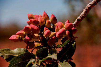 Nuevo proyecto ESLA: Planta de procesado del pistacho