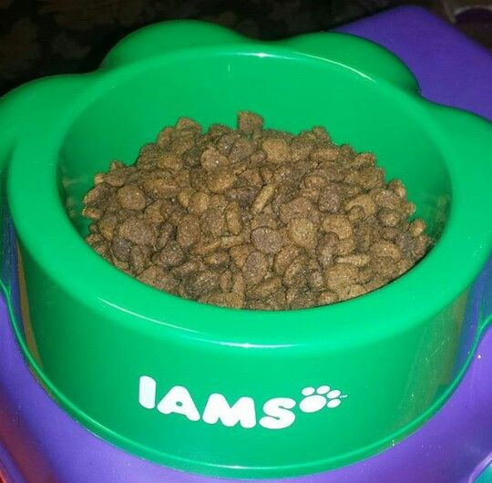 Time For A Great Big Bowl Of Iams Mini Chunk Dig Food I Just