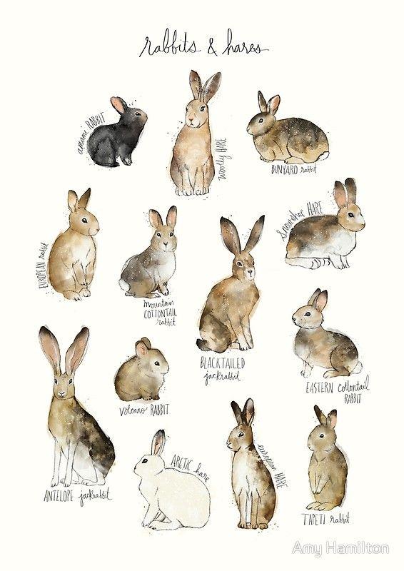 'Rabbits & Hares' Canvas Print by Amy Hamilton