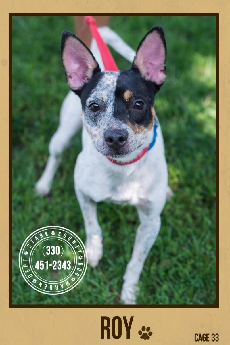 Adopt Rocky 20173 AKA Chip on Find pets, Stark county