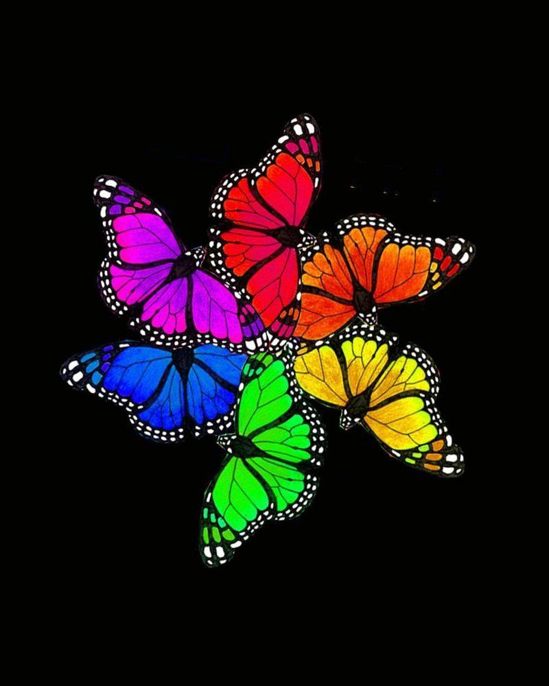 the most awesome images on the internet butterfly rainbows and
