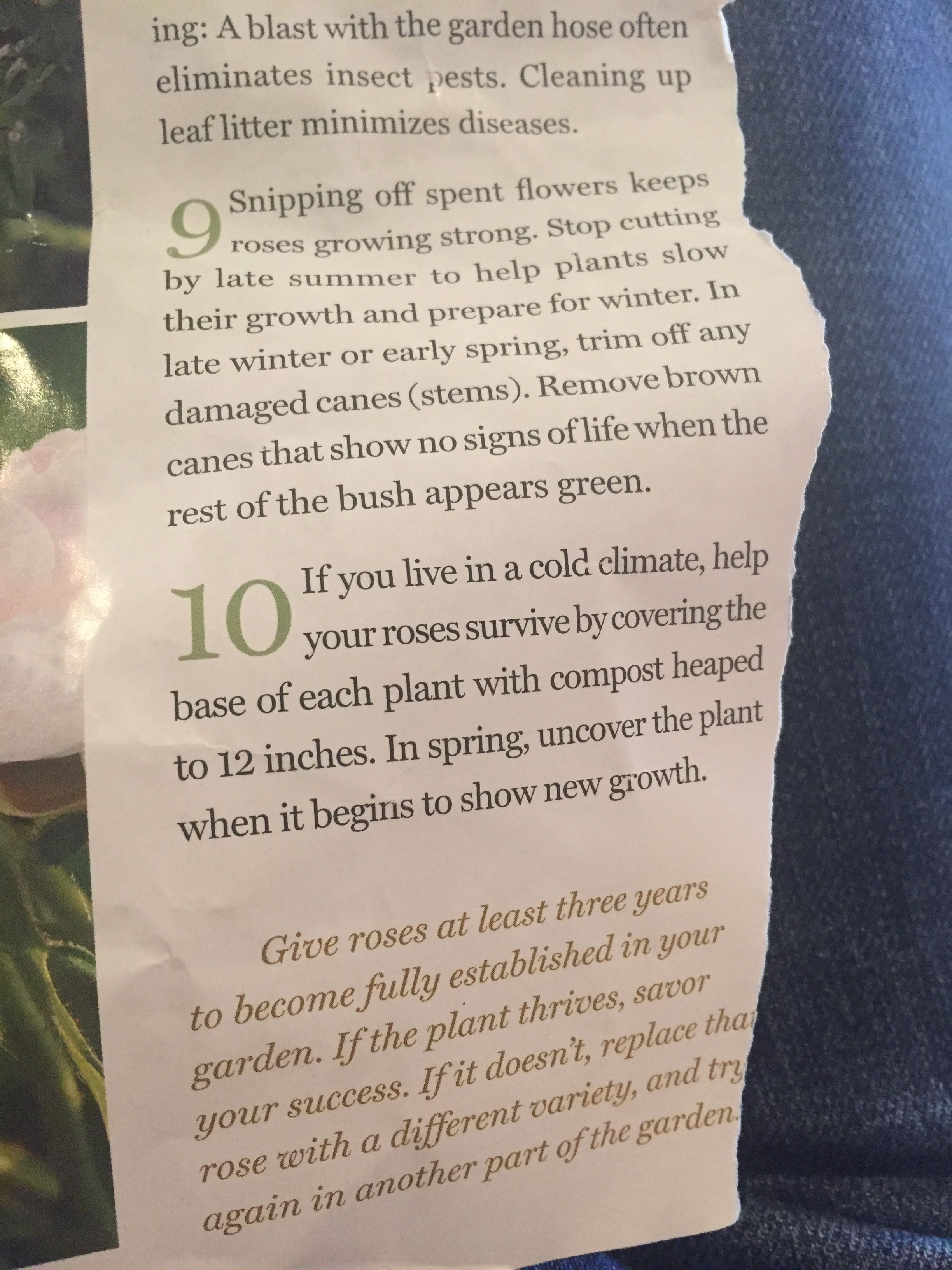 Pin By Elizabeth Maertens O Flaherty On Garden Growing Roses Growing Strong Insect Pest