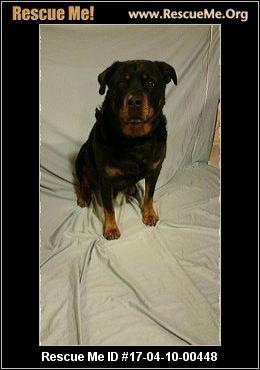 Illinois Rottweiler Rescue Adoptions Rescueme Org Rottweiler