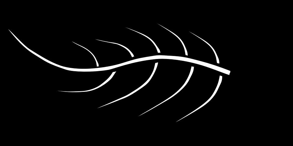 terbaru 36 vektor daun hitam putih download tree perennial trunk free vector graphic on pixabay download coffee backgr di 2020 kartun silhouettes hitam dan putih terbaru 36 vektor daun hitam putih