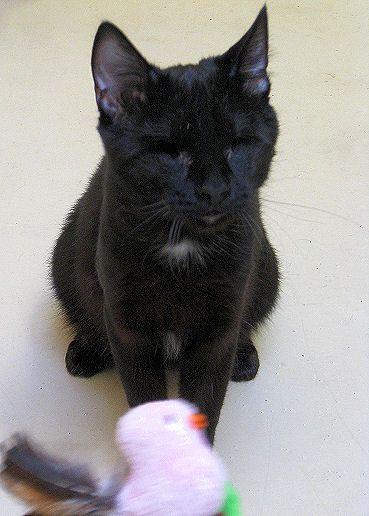 Jelly Bean Feline Cat Rescue Cats