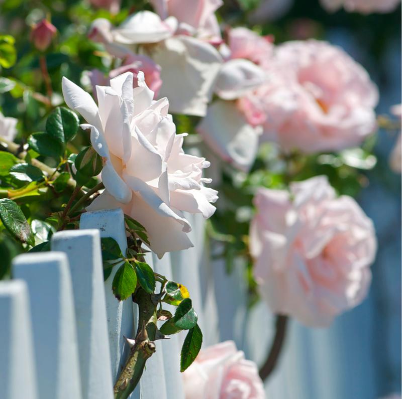 Заборчики, калиточки, цветочки. Часть 1 - Дизайн ...  Цветочки Розы