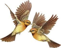 Uwt V Hg Bird Gif Birds Flying Bird
